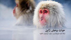 حیات وحش ژاپن - دانلود مستند حیات وحش ژاپن با لینک مستقیم و به صورت کاملا رایگان