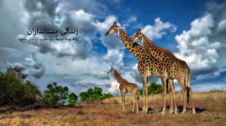 زندگی پستانداران - دانلود مستند زندگی پستانداران با لینک مستقیم و به صورت کاملا رایگان