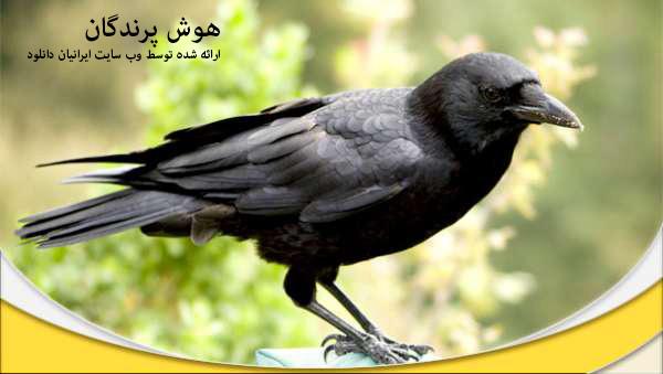 هوش پرنده - دانلود مستند هوش پرنده با لینک مستقیم و به صورت کاملا رایگان