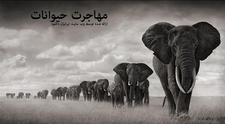 مهاجرت حیوانات - دانلود مستند مهاجرت حیوانات با لینک مستقیم و به صورت کاملا رایگان