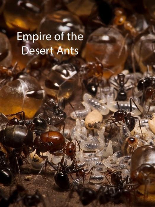 دانلود مستند امپراطوری مورچههای صحرایی - Empire of the Desert Ants 2011