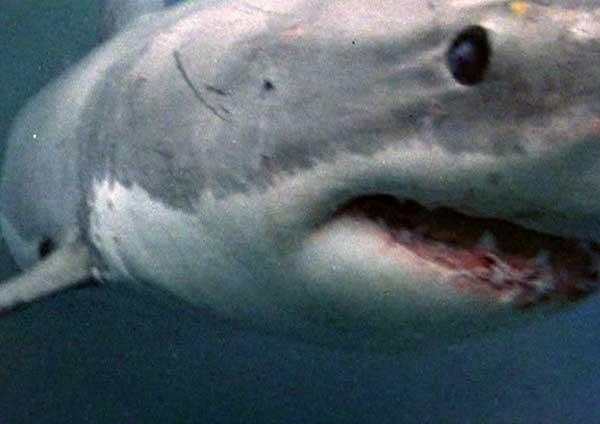 دانلود فیلم قلمرو کوسه Shark Zone دوبله فارسی فیلم سینمایی Shark Zone 2003
